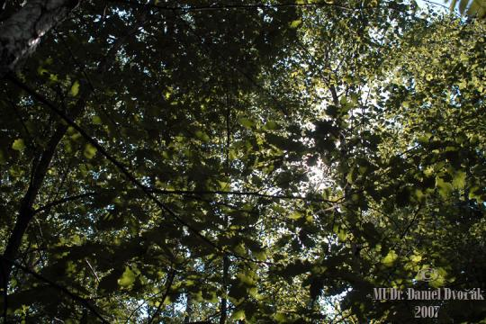 Michelský les -